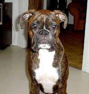 DOG TRAINING,  BOARDING,  GROOMING,  DOG FOOD,  CHEWS & ACCESSORIES,