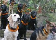Pets for sale in Delhi,  Pets for sale in Delhi,  Pets for sale in Delhi