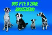 Exceptionally Quality Boxer pupies for sale in delhi