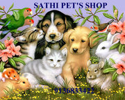 Tibaten mastiff puppies for sale in delhi