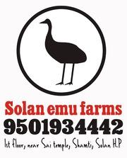 Solan Emu Farms