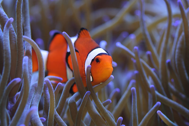 Tropical Saltwater Fish For Sale - #GolfClub
