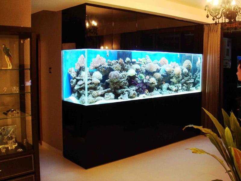 Marine aquarium fish for sale in wholesale and retails for Marine fish tanks