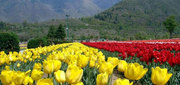 Kashmir Tour Packages with Srinagar for 4N/5D @14801/-