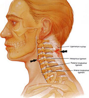 Cervical Spine Surgery in India to Cure Disorders of Cervical Spine  DESCRIPTION:-