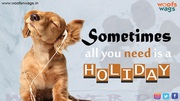 Best Online Pet Supplies Store in India | Woofsnwags.in