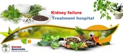 Use Ayurvedic Medicine For Kidney Disease - Karma Ayurveda