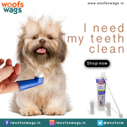 Best Online Pet Supplies Store in India | Woofsnwags.in - Pet supplies