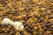 Pet Food Supplier - Pet supplies