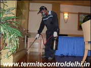 Looking for Anti Termite Treatment in Dwarka