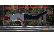 200 Hours Yoga Teacher Training in Delhi