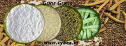 Find Guar Gums Importers Customs Data in India