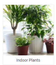 Indoor Plant Online for home decoration and fresh air
