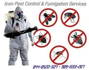 Icon Pest Control & Fumigation Services