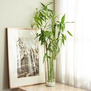 Houseplants for Your Bathro